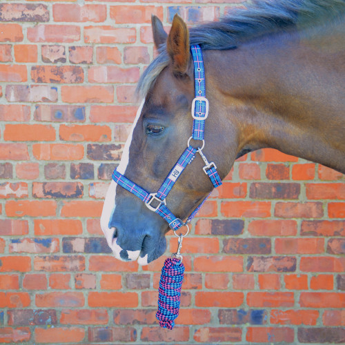 Hy Tartan Head Collar with Lead Rope - Pink/Navy/Kingfisher Blue - Pony