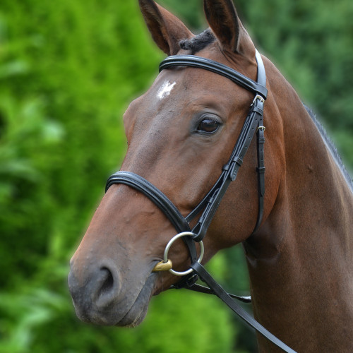 Hy Padded Cavesson Bridle with Rubber Grip Reins - Black - X Small 1/2''