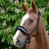 Hy Equestrian Dazzle Head Collar