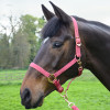 Hy Equestrian Rose Gold Head Collar & Lead Rope