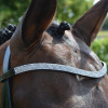 Hy Equestrian Diamond Flash Bridle with Rubber Reins