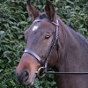 Hy Hunter Bridle with Rubber Grip Reins - Black - Pony