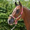 Hy Equestrian Multicolour Adjustable Head Collar & Lead Rope