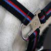 Hy Signature Head Collar & Lead Rope