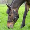 Hy Equestrian Fieldsafe Head Collar